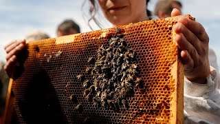 HARVEST Honey harvest expected to decline dramatically in France
