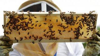 Crolla produzione di miele in Francia, colpa dei cambiamenti climatici