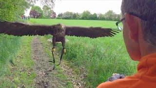 ADLER REAL ESTATE AG Video eines ungewöhnlichen Fluges: Köln aus der Adler-Perspektive
