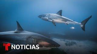 Planeta Tierra: La pesca ilegal de los tiburones pone en peligro el bienestar de nuestros océanos
