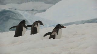 VAST RESOURCES ORD 0.1P Vast natural reserve proposed for oceans off Antarctica
