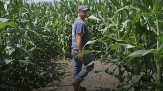 CORN How corn mazes saved one family's farming business