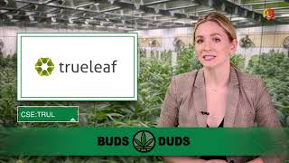 AMP LIMITED Buds & Duds: Cannabis stocks show early gains; TGOD higher as it ups Canadian footprint