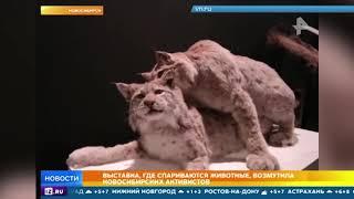 Выставка со спаривающимися животными возмутила активистов