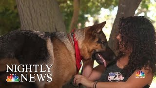 Nonprofit Changing Lives With Service Dogs For Veterans And First Responders | NBC Nightly News