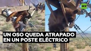 Rescatan a un oso atascado en un poste eléctrico