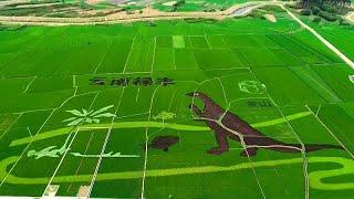 Watch: Giant dinosaur roams Chinese rice paddy