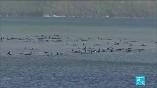 """Australie : hécatombe de """"dauphins-pilotes"""" coincés dans une baie"""