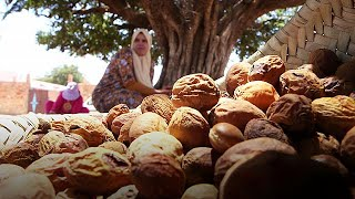 ARGAN The gold that grows on Morocco's argan trees - target