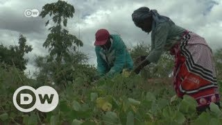 CORN Drought and corruption fuel corn crisis in Kenya   DW English