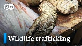 Wildlife trafficking in Peru | Global Ideas