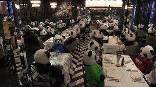 Un comerciante llena su local de osos panda de peluche para protestar contra el cierre del mismo