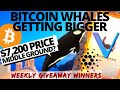 BITCOIN WHALES GROWING! Vechain HACK | Cardano Shelley | QUADRIGACX | Bitcoin and Crypto News