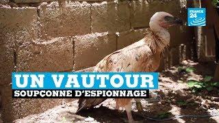 Un vautour bulgare échoué au Yémen et soupçonné d'espionnage