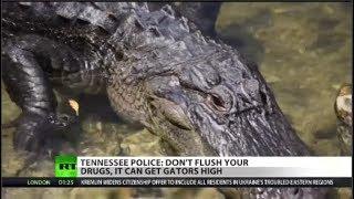 Police warn of 'meth gators' in Tennessee