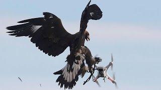 ADLER REAL ESTATE AG Tierische Luftabwehr: Adler holen Drohnen vom Himmel