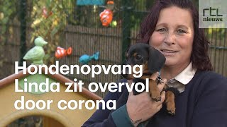 LVMH Linda moet honden weigeren, haar dagopvang zit overvol door corona