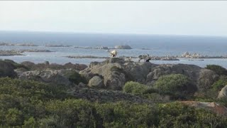 Asinara: da isola-prigione a luogo di cultura