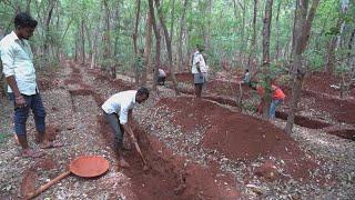 Covid-19 en Inde : privés d'emploi, les cadres de retour aux champs