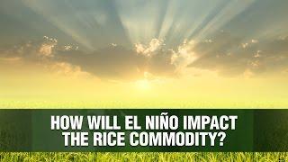 ROUGH RICE Con un ojo en el arroz