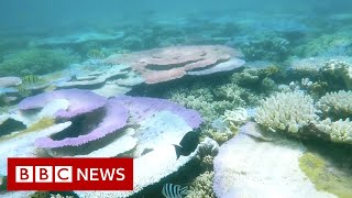 REEF Could the Great Barrier Reef lose its world heritage status? - BBC News