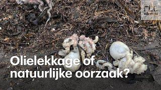 Hoe dan? Russische surfers ontdekken massale zeedierensterfte